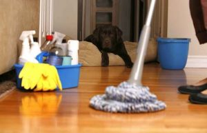 Domestic cleaners in Saint Lucia – safe, affordable, and thorough
